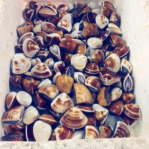 ракушки ракушка Seafoods Sea Food Море морепродукты First Eyeem Photo