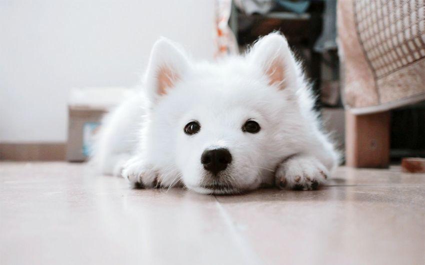 Portrait of dog resting