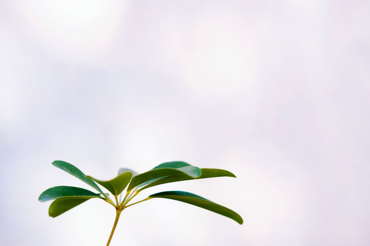 Plant Part Leaf Plant Green Color Beauty In Nature Nature Close-up Growth No People Focus On Foreground Freshness Day Outdoors Fragility Copy Space Vulnerability  Tranquility Beginnings Sunlight Low Angle View