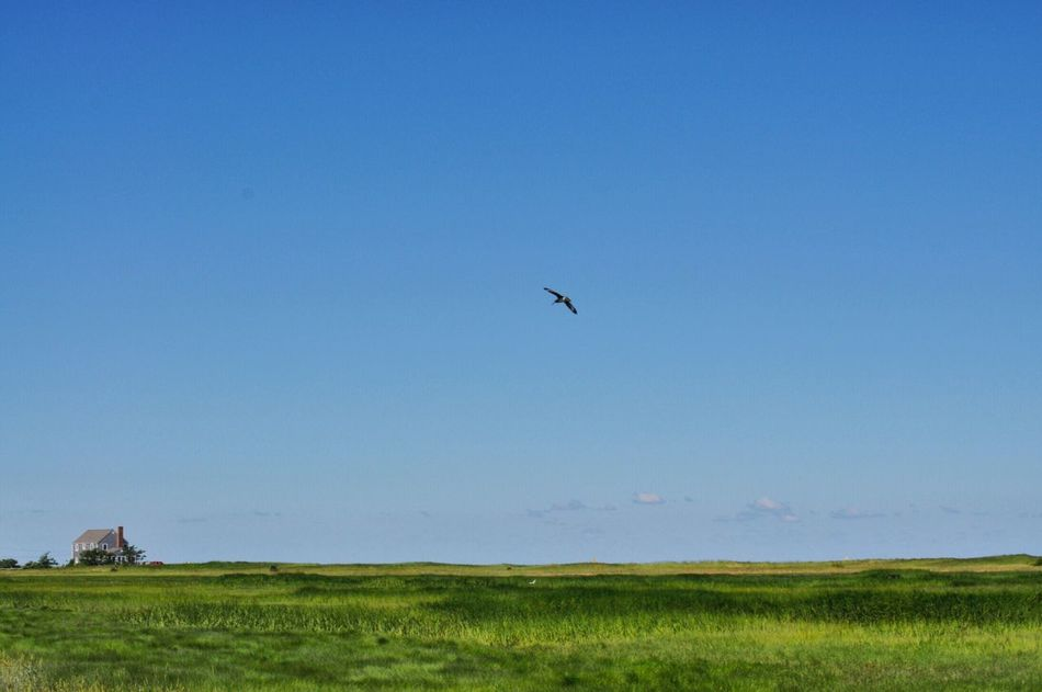 Cape Cod Seashore Bluesky Midday Nature Narure_collection Bird Landscape Wideangle Lens Walking Around Nopeople Serenity Stressfree Travel Photography Lessismore Outdoor Photography Unspoiled Beautiful Nature Waterfrontview Waterfront Trail Greenfields Shadesofgreen ❤️CapeCod EyeEm Nature Lover