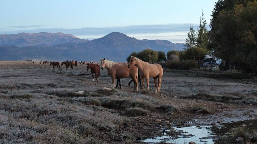 Patience Morning Light Beauty In Nature Eye4photography  Horse Photography  Tadaa Community EyeEm Best Shots TheWeekOnEyeEM EyeEm Selects