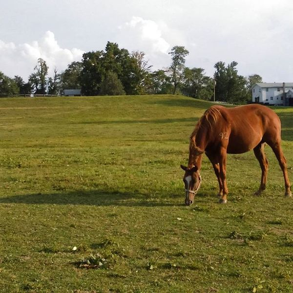 Kentucky  Horse Grazing in afternoon Light Beautifulgirl Special Moment Peace & Tranquility Inprogress Adventure Nature Gift of Life Alive  Free Blessings PhonePhotography AprilinProgress Color Zoom Simplicity