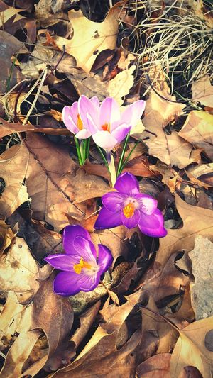 Todays Blooming Beauty Overwhelm My Soul Natural Beauty Nature_collection Flowerporn Flower Collection Rebirth Earthporn Share Your Adventure Hugging A Tree EyeEm Masterclass EyeEm Nature Lover First Blooms Of The Year Minimalist Photography  This Week On Eyeem Ecosystem  Visualsoflife Urban Nature Peaking Through Spring Simple Beauty Magestic No People Blooming Leaves