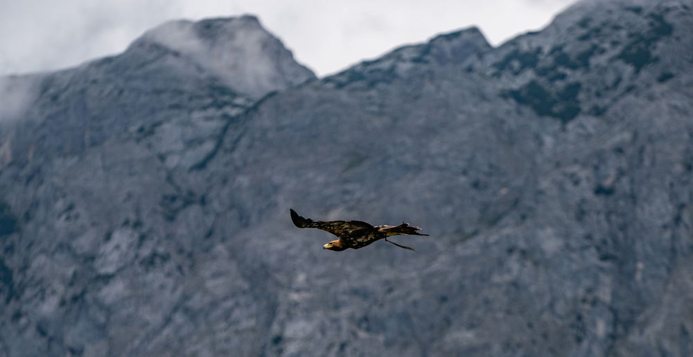 Austria Eagle Animal Animal Themes Animal Wildlife Animal Wing Animals In The Wild Beauty In Nature Bird Day Flight Flying Focus On Foreground Insect Mid-air Mountain Nature No People One Animal Outdoors Rock Solid Spread Wings Stone Vertebrate