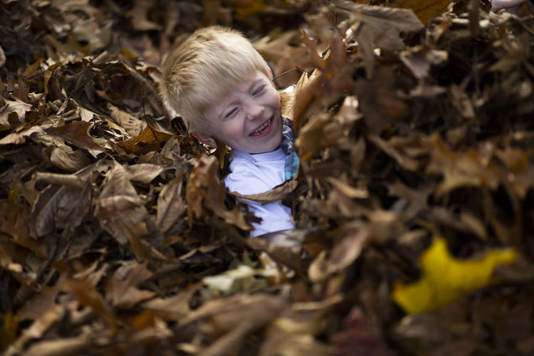 A five-year-old blonde haired boy plays in a leaf pile in his yard on a fall afternoon. Childhood Child Smiling Happiness Emotion Plant Part Leaf Innocence One Person Offspring Hair Autumn Portrait Nature Blond Hair Cheerful Day Outdoors Leaves Change Fall Fun Blonde Boyhood Happiness