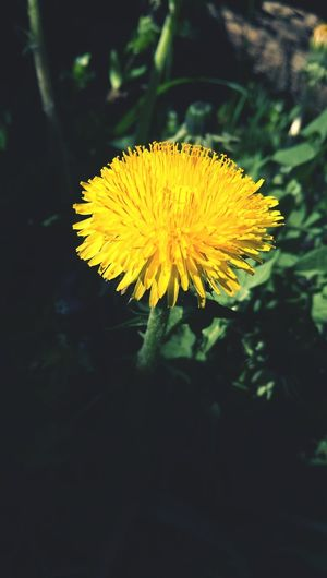 Flower Yeloow Flowers