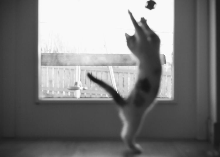 Our new kitten 💕 Neelix Scotland Scotland 💕 Play Feline Garden Ball Cats Of EyeEm Cat Lovers Play Joy Kitten Indoors  One Person Window Lifestyles Full Length Dancing Glass - Material Leisure Activity Home Interior Motion