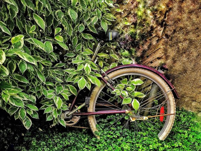 Portrait Of Abandonment! Wheel Transportation Bicycle Mode Of Transport No People Land Vehicle Outdoors Tire Green Color Day Plant Spoke Grass Nature Pedal Close-up