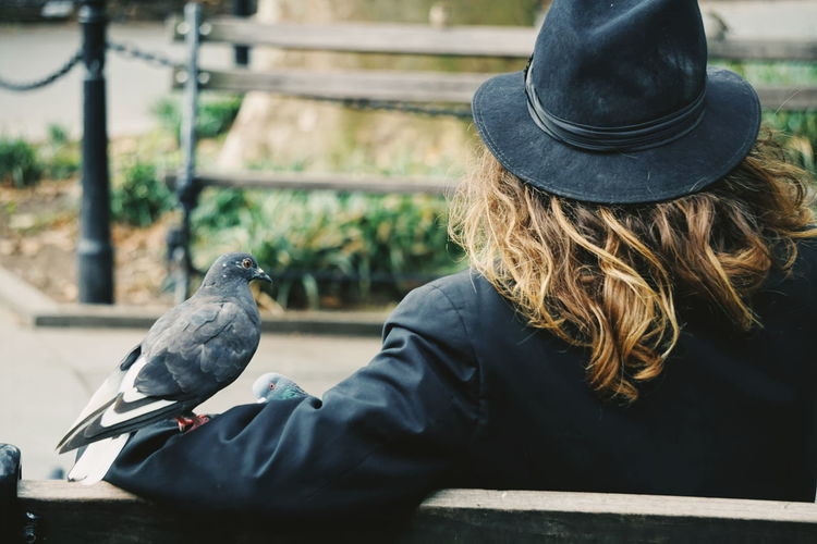 The Birdman Bench Bird Photography Birds Of EyeEm  Doves Fashion Hat Man Manhattan Animal Themes Animal Wildlife Animals In The Wild Bird Birds Day Dove Focus On Foreground Long Hair One Animal One Person Outdoors Park People Perching Pigeon Pigeons Raven - Bird Real People Rear View Resting Washington Square Park