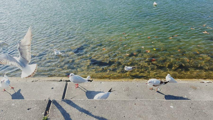 High angle view of seagulls at riverbank