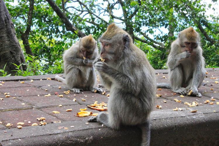 Monkeys near