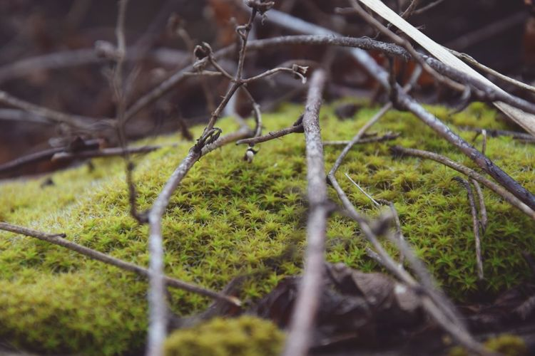 Tiny Moss Forrest Fluffy Moss Close-up Close Up Photography Macro Photography Twigs And Leaves Soft Focus Railway Track Wood - Material Dried Plant Nature_collection Nature Photography