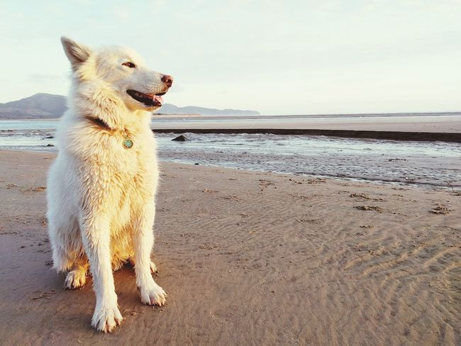 Animal Themes Beach Beauty In Nature Day Dog Domestic Animals Full Length Horizon Over Water Mammal Nature No People One Animal Outdoors Pets Sand Sea Sky Water