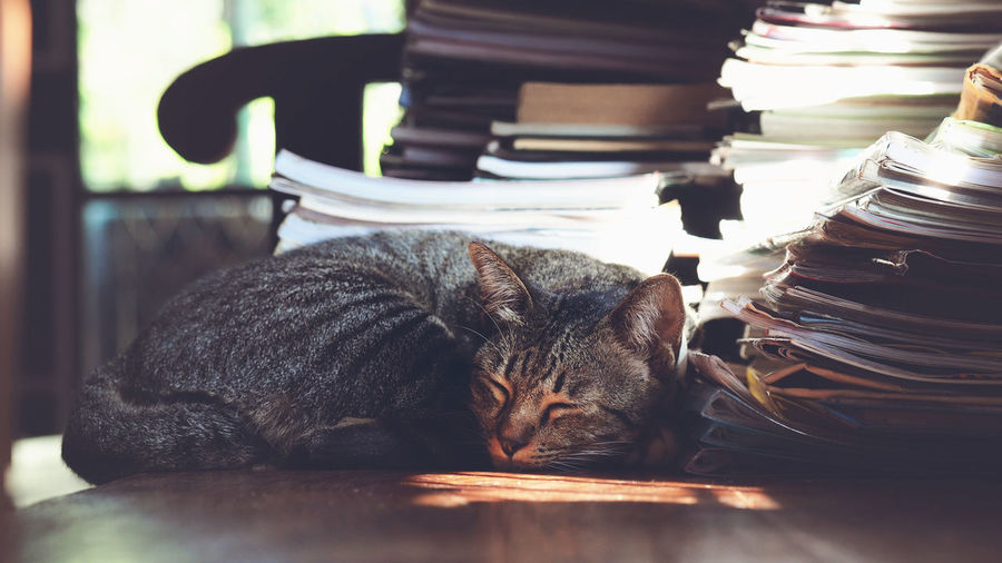 Lovely cat in in lazy day, cat sleeping on wood chair with book stack in morning light, vintage color tone process Cat Animal Wildlife Animal Kitty Pet Portraits Pets Mammal Nature Domistic Pets Lovely Book Stack Chair Home Backgrounds Morning Light Lazy Day