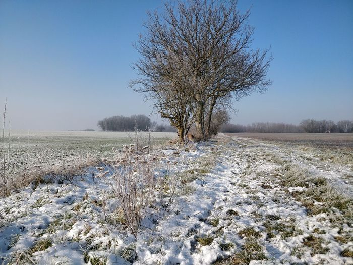 Frozen tree on field against clear sky during winter