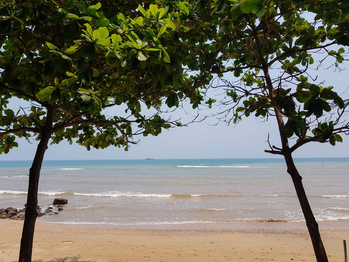 Beach Beauty In Nature Branch Day Growth Horizon Horizon Over Water Land Nature No People Outdoors Plant Sand Scenics - Nature Sea Sky Tranquil Scene Tranquility Tree Water