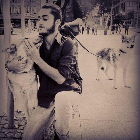 Wolfshund Kuss Hunde Liebe ❤