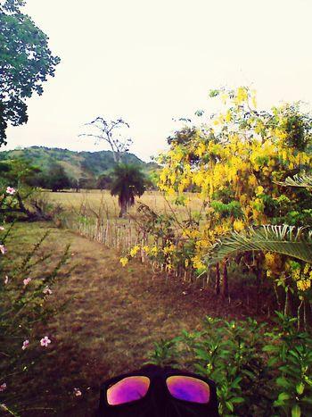 Beautifultrees Yellow Backyard Adventure Enjoying Nature ?