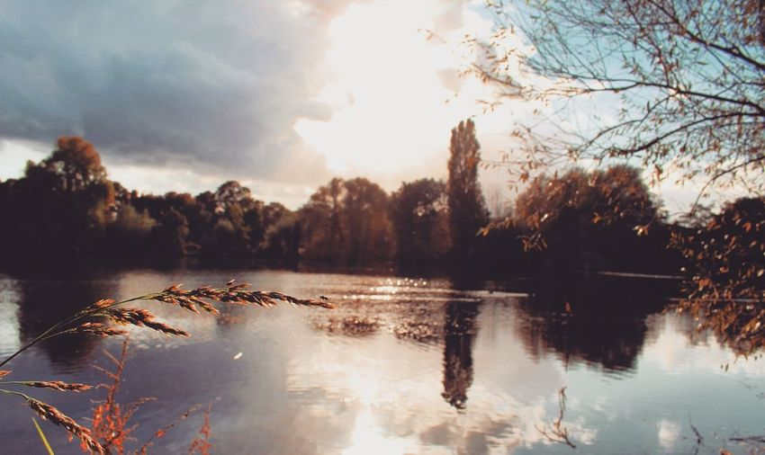 Water Tree Sky Reflection Lake Outdoors Autumn Nature Sunlight No PeopleOutside Berlin Nature Tree Landscape Nature Wanderlust Nature Outside Photography Canonphotography