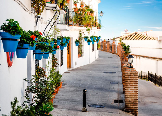 Mijas street. Charming white village in Andalusia, Costa del Sol. Southern Spain Andalucía Blue Color Charming Village Costa Del Sol Decoration Europe Famous Place Flower Pot Landmark Malaga Mijas Mijas Spain Mijasvilage Narrow Street Picturesque Residential Building SPAIN Spanish Street Sunny Day Tourism Town Village White Houses White Washed