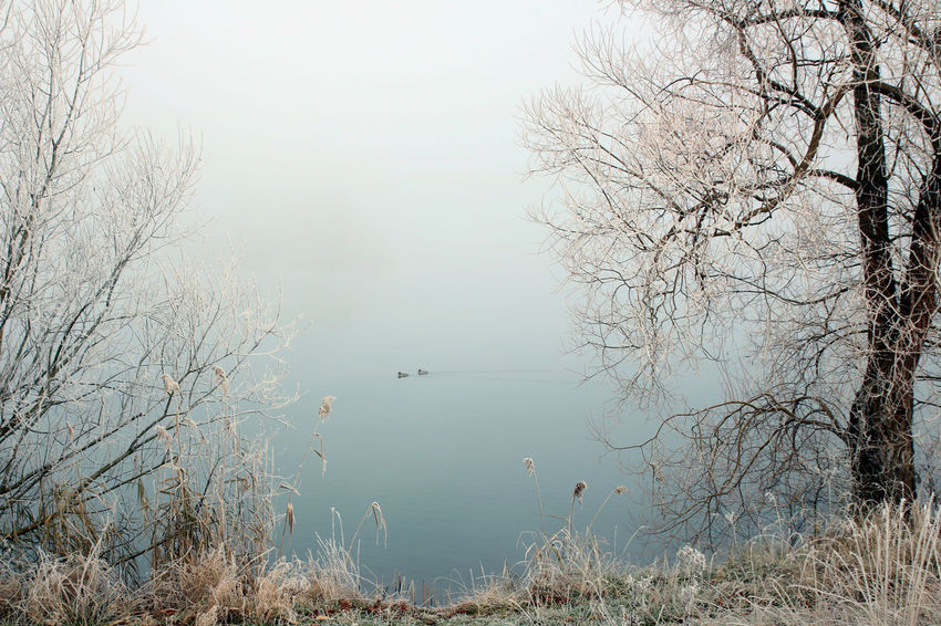 The fog made the lake almost invisible and merged the horizon and the sky. Sometimes there's a view if there's no view. Blue Branches Clouds Duck Ducks Fog Foggy Frost Frosty Ice Lake Winter