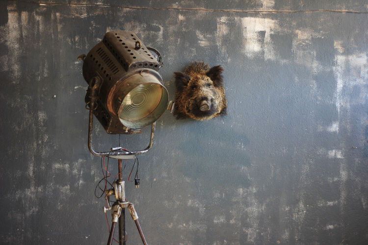 Old projector lamp and stuffed animal head on grey wall