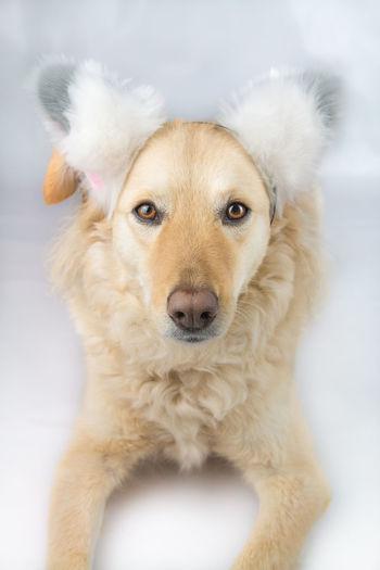 Close-up portrait of cute dog