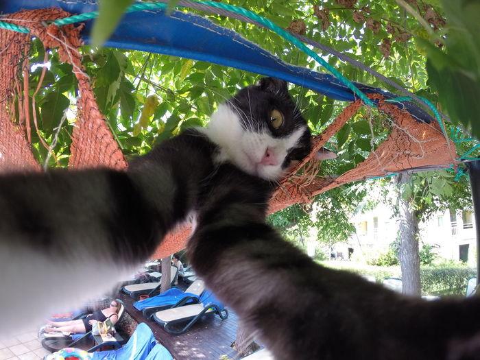 A cat grabbed