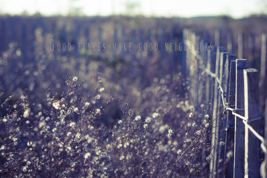 Bush Fence Fences & Beyond Focus On Foreground Natural Pattern Plant Proverb Woods Pastel Power