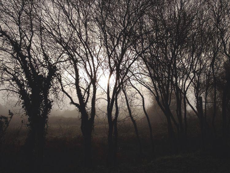 Bom dia* Foggy Morning Sun Monochrome
