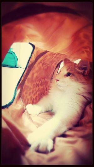 First Eyeem Photo Cat