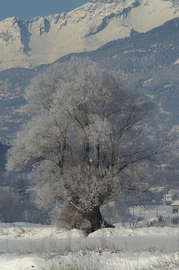 Snow covered tree on landscape