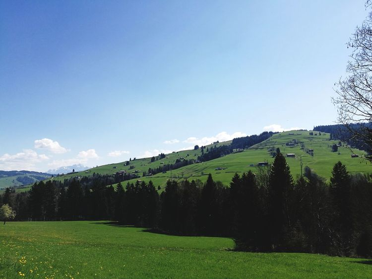 Blue Landscape Sky Green Color Nature Tree Forest No People Scenics Grass Cloud - Sky Mountain Outdoors Day Field Tree Nature Growth Green Color Grass