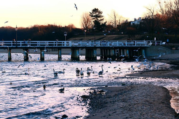 Eyem Best Shots Seagulls Beach Nature Sea Baltic Sea Nature_collection Landscape Pier Swans