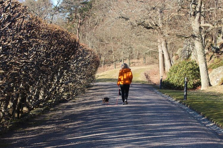 Rear view of woman walking on road with dog at park