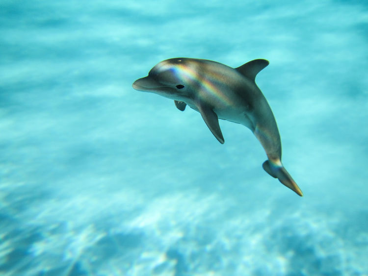 Animal Themes Aquatic Mammal Beauty In Nature Blue Close-up Dolphin Nature One Animal Schleich Sea Life Swimming UnderSea Underwater Water Sommergefühle Summer Exploratorium