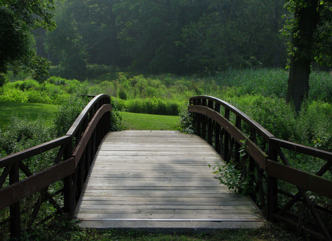 A Bridge to... Green Wood Beauty In Nature Bridge Day Forest Grass Growth Landscape Nature No People Outdoors Park Railing Scenics The Way Forward Tranquility Tree EyeEmNewHere