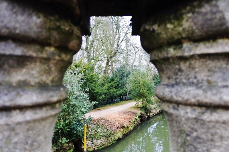 Oxford through a frame... No People Nature Close-up Day Growth Outdoors Beauty In Nature Oxford Low Angle View Nature Bridge View Bridge
