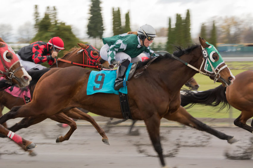 Adult Adults Only Animal Themes Day Domestic Animals Horse Horse Races Horse Racing Jockey Mammal Outdoors People Real People Sports Race Three Animals Let's Go. Together.