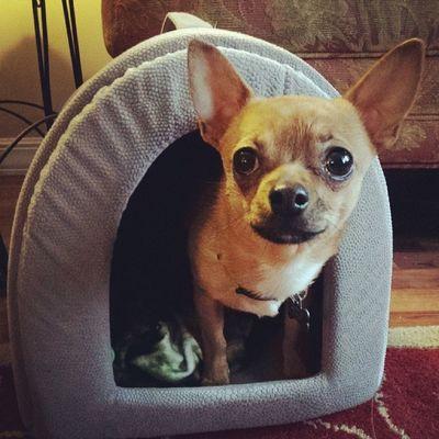 In the dog house! Dailyzigga