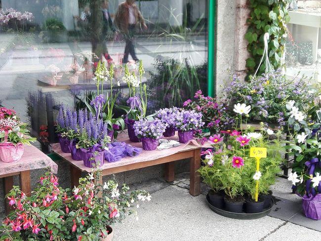 Enjoying Life Austria Outdoors Pretty Building Flowers Display Flower Collection Plantsforsale Badischl