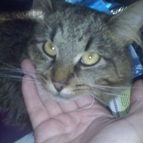 Cat от @dmitrovchanochka Люблю_кошек ЛюбителямКошек