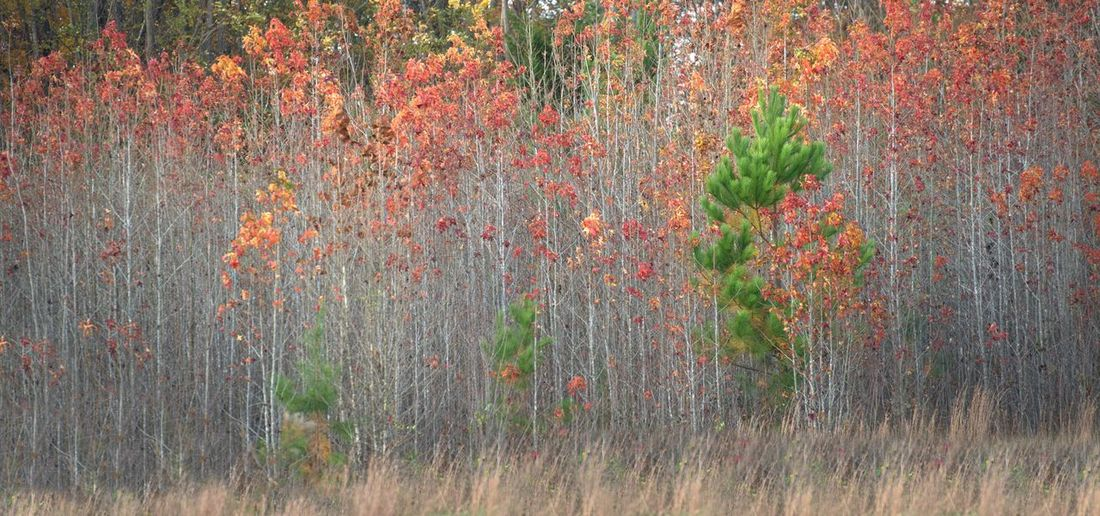 Close-up of plant growing in forest during autumn