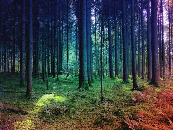 Forest of fall. Mexture code is JTYITWI Mexturesapp Mextures Eyem Nature Lover Forest