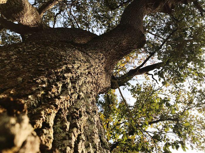 2017 Tree