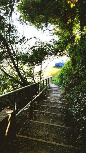 Saint Margarets Bay Wild Footpath Summer