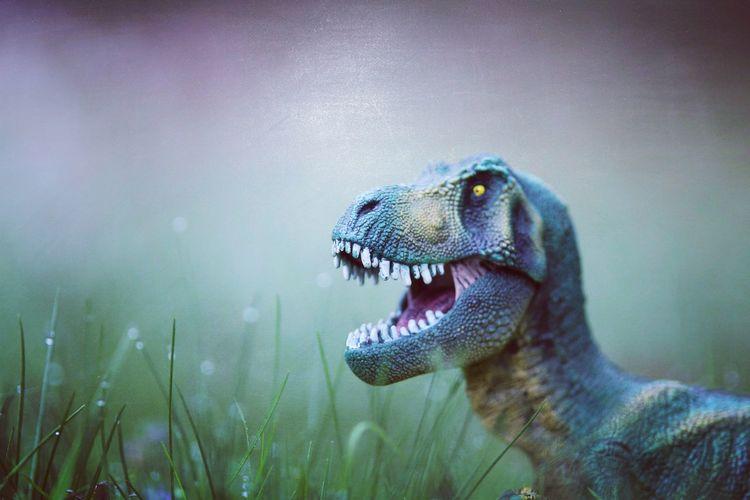 Close-up of dinosaur on field
