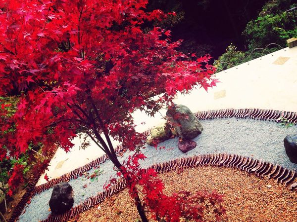 こおろぎ橋の近くで Autumn Colored Leaves Red Gardening