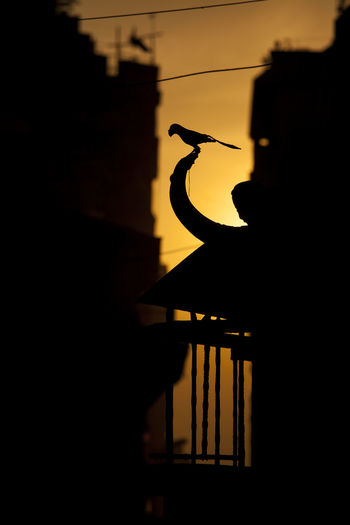 Low angle view of silhouette bird perching on building