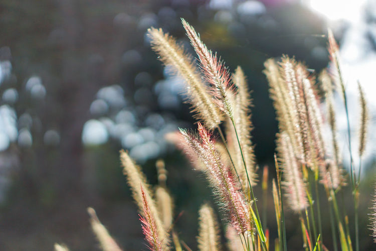 Beauty In Nature Close-up Day Field Focus On Foreground Freshness Growth Nature No People Outdoors Plant Sunlight